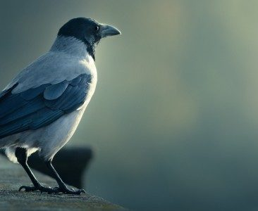bird-750x300